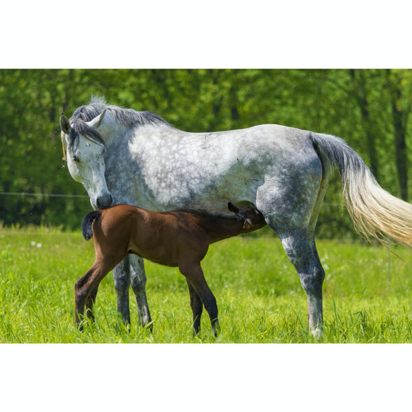 Mothering Plus - Equine