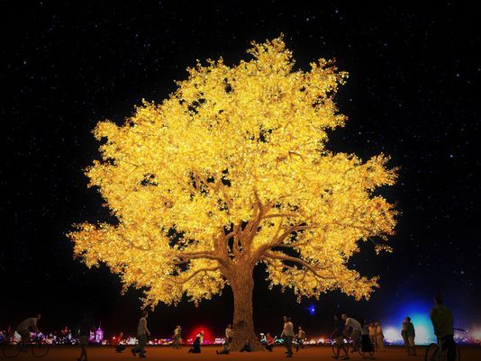 Tree of Ténéré - LED Lighting