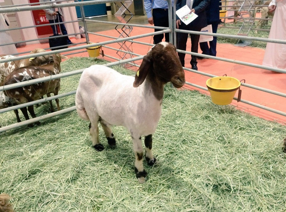 Livestock Demo with Real Animals at Trade Show
