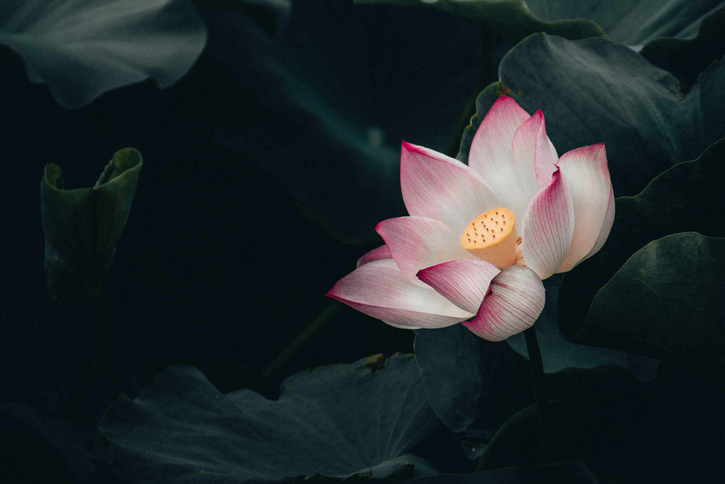 How to ditch the funk, and grow your inner lotus flower