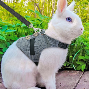 Rabbit Harness Vest