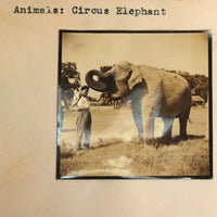 Rare Antique Circus Photograph Negative with Elephant and Trainer Depression Era