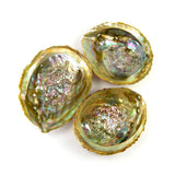 Green Abalone Shell