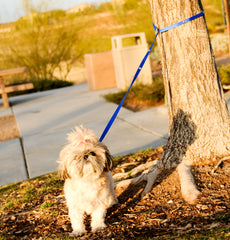 SnapLeash | Blue | 7.5ft x 5/8in | SMALL Dogs < 50lbs