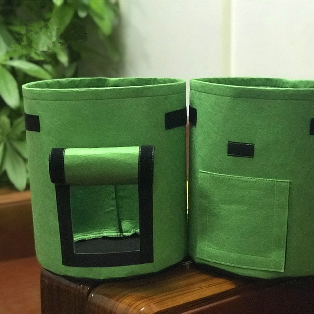 Garden Grow Bag - Kitty Cactus