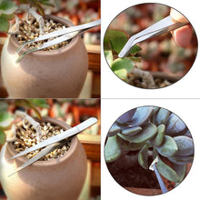 Load image into Gallery viewer, Take Care of your Cacti! Houseplant Gardening Kit