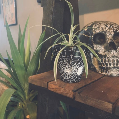 Spider Plant Pot - Happy Emo