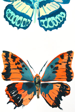 Orange & Teal Butterfly Study