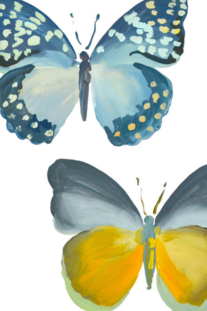 Blue & Gold Butterfly Study