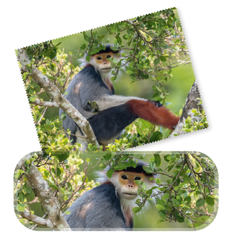 Wildlife Photographer of the Year Treetop Douc Glasses Case