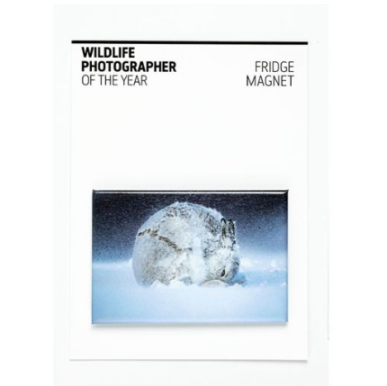 Wildlife Photographer of the Year Hare Ball Fridge Magnet