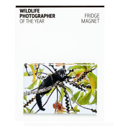 Wildlife Photographer of the Year Top Picker Fridge Magnet