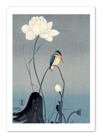 Kingfisher with Lotus Print