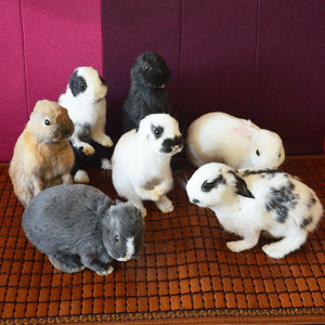 Taxidermy stuffing rabbit,bunny fur specimen Teaching / Decoration 5pcs random - goldylify.com