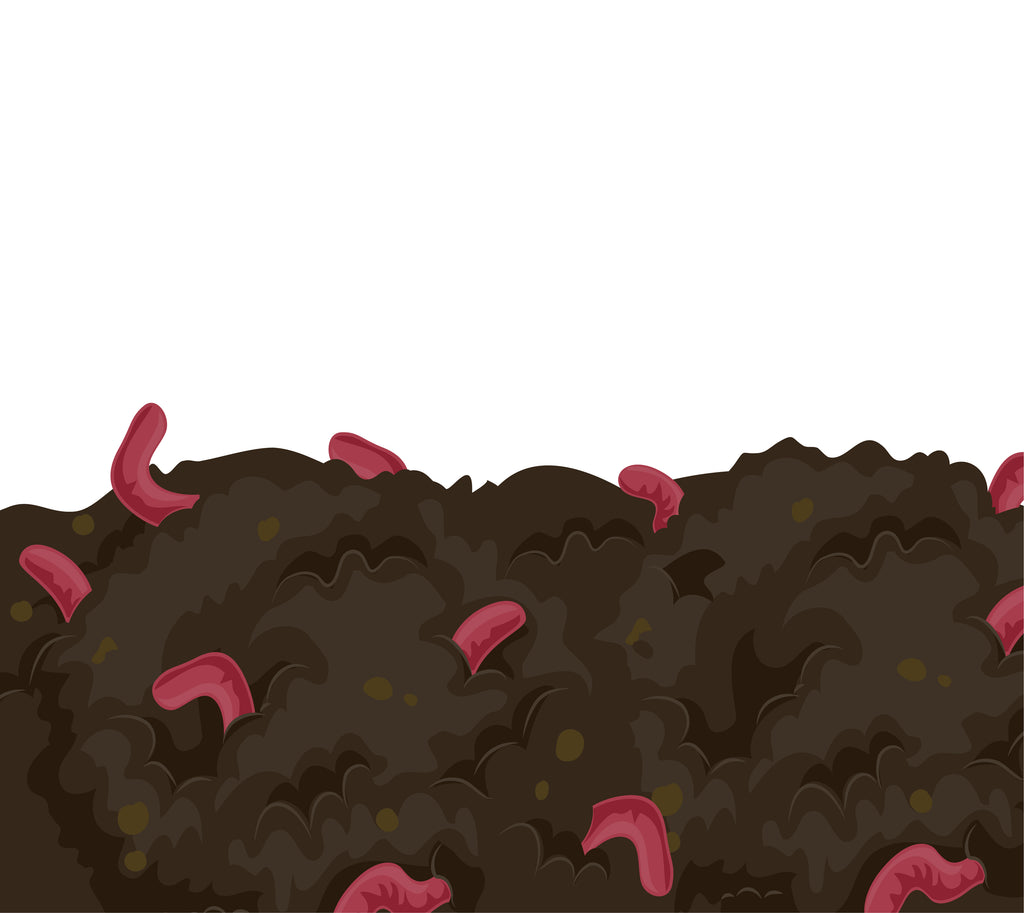 Red Wigglers Compost Worms - Wormbox.ca