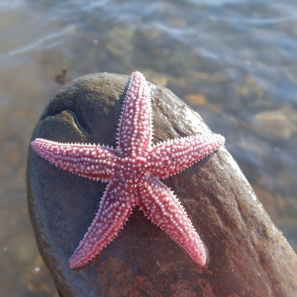 Why a Starfish?
