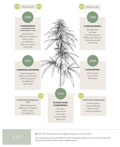 Cannabinoids and their benefits