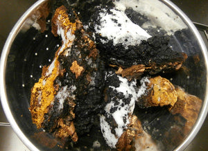 Chaga Medicine and Sustainability