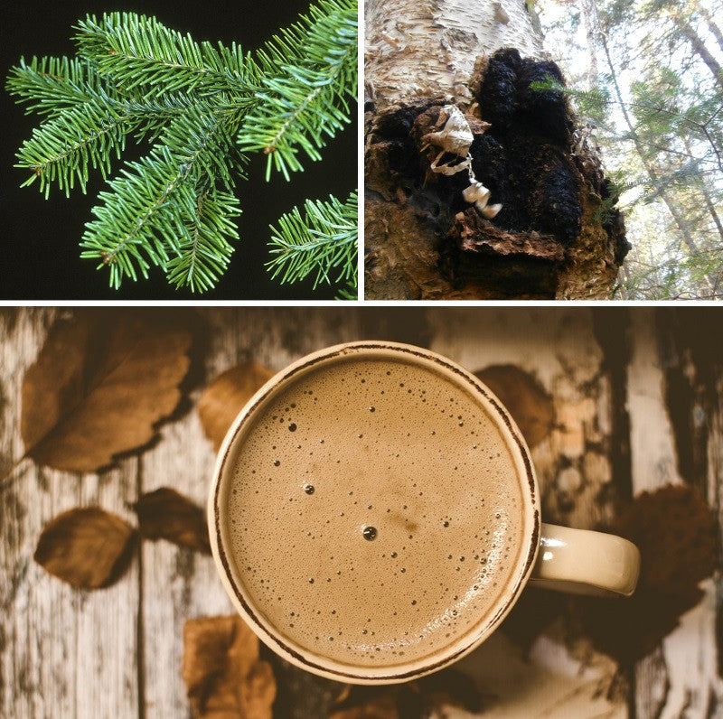 Balsam Fir, Chaga, and Chocolate