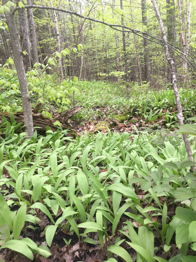 ramps-mixed-forest