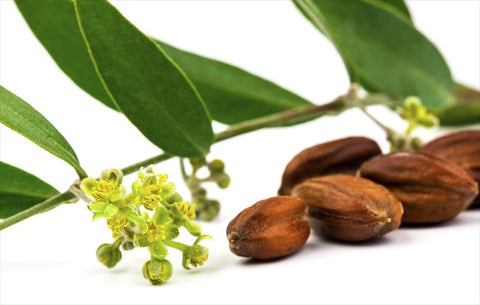 jojoba oil for your skin
