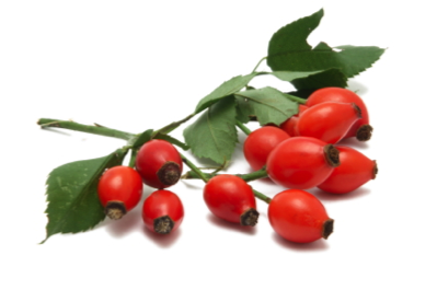 rosehip seed oil benefits