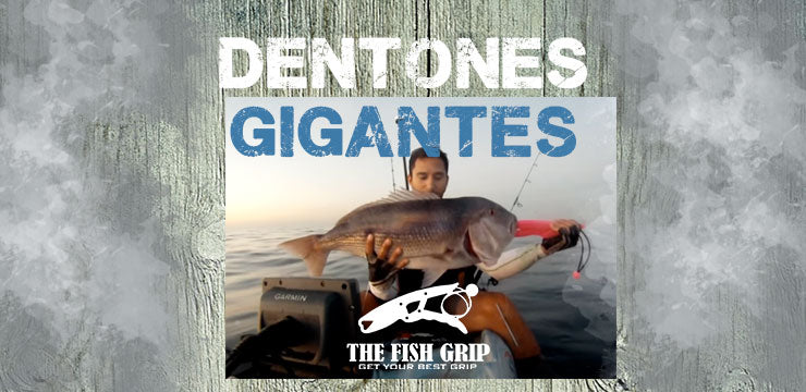 Dentones Gigantes vs The Fish Grip