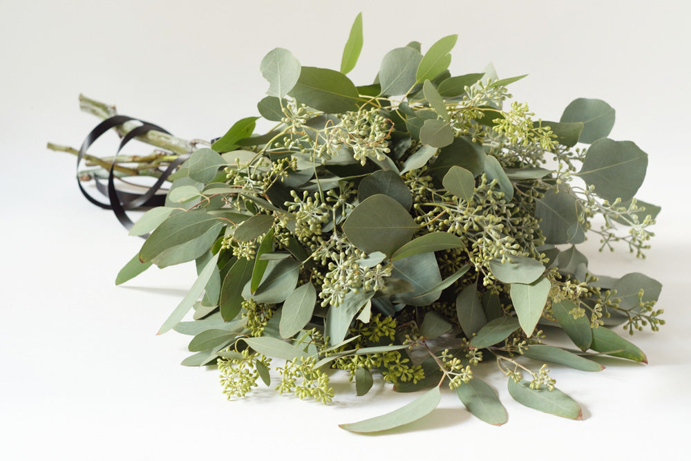 Seeded Eucalyptus - Élan Flowers