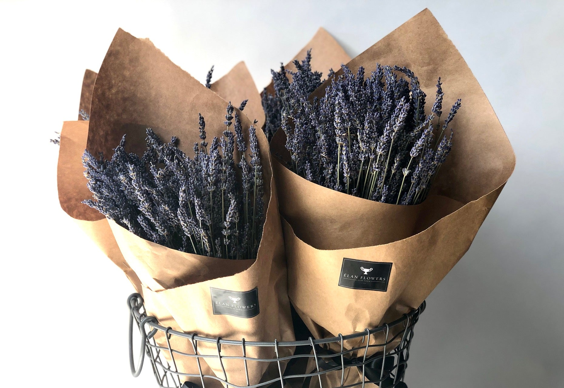 Dried Lavender from the South of France - Élan Flowers