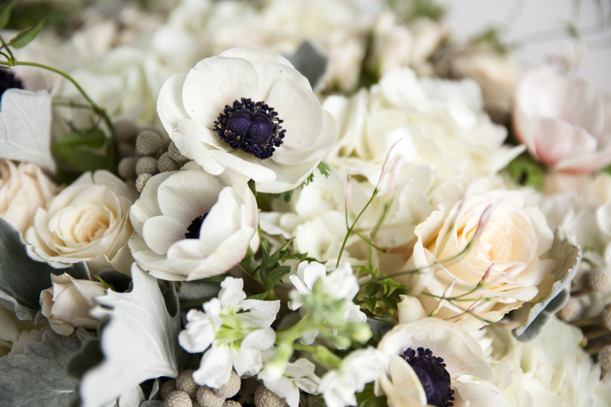 Dusty Whites - Élan Flowers roses anenome
