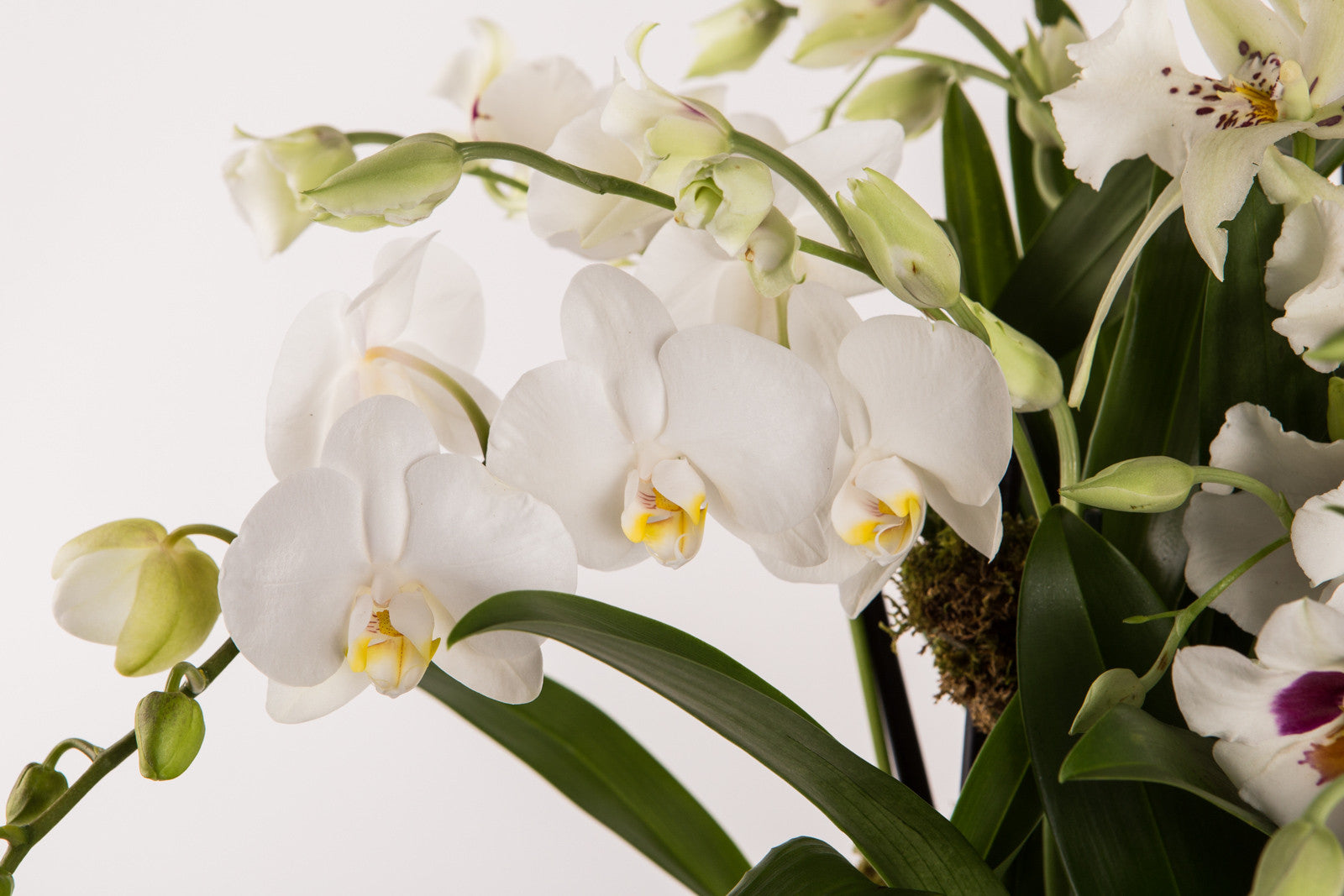 Élan Signature Orchid Arrangement - Élan Flowers