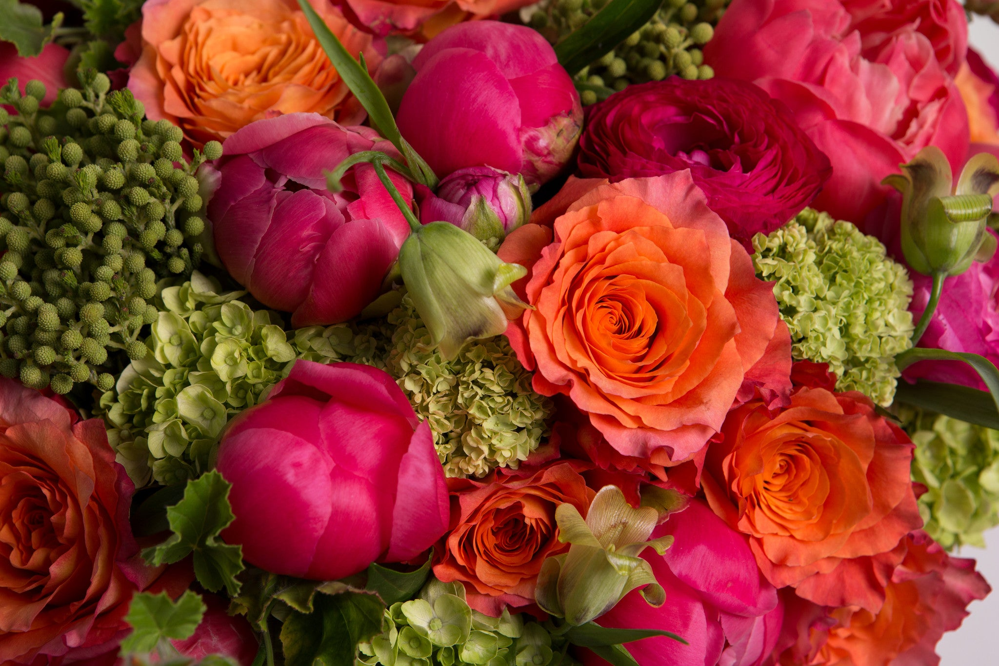 Coral Charm - Élan Flowers peonies