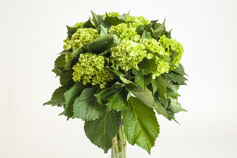 Mini Green Lime - Élan Flowers - delivered in New York City