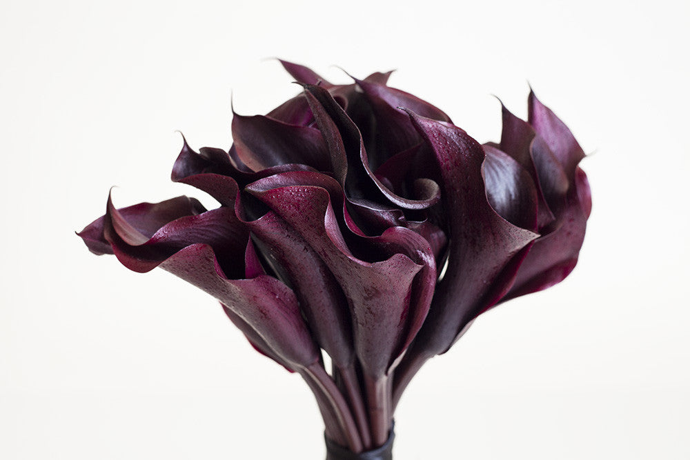 Black Callas - Élan Flowers