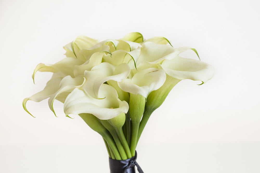 White Callas - Élan Flowers