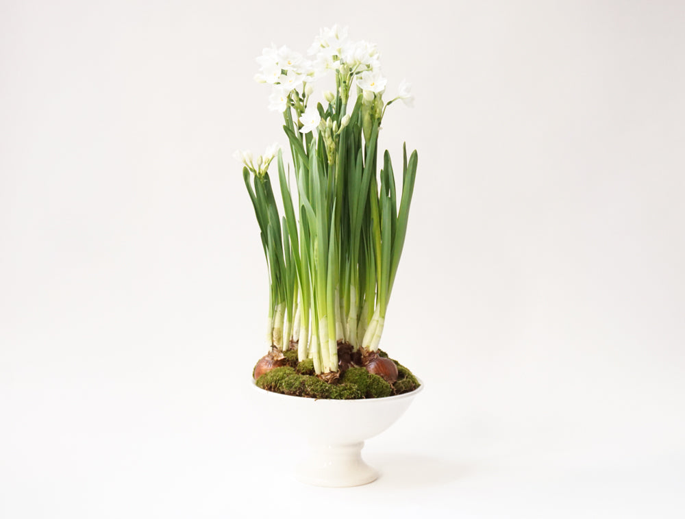 Paper Whites - Élan Flowers - new york city floral delivery