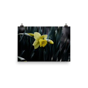 Local Artist Nature Series 10 Poster Matte