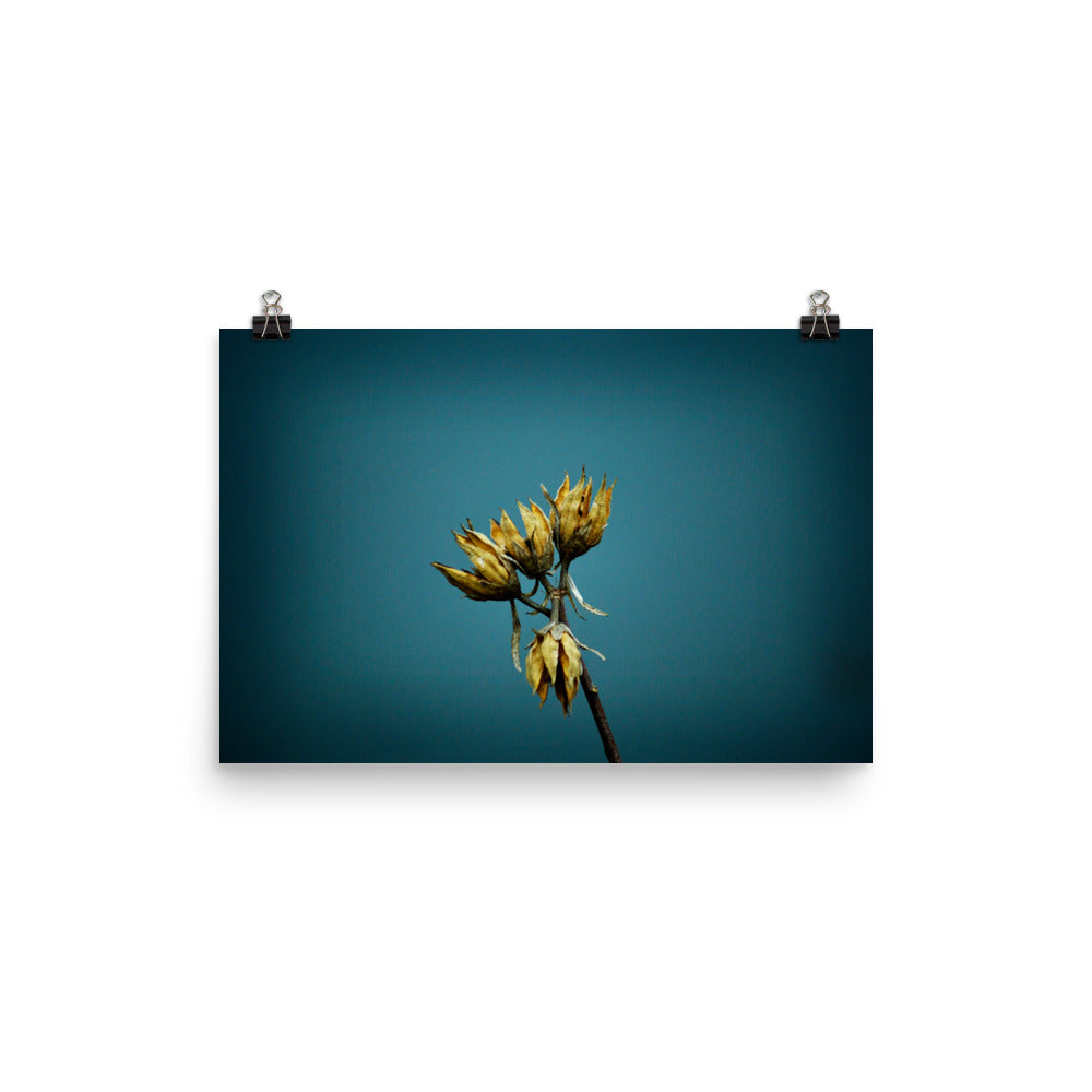 Local Artist Nature Series 8 Poster Luster