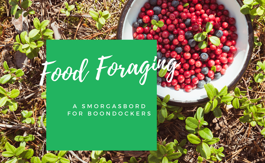 Let's Talk Food Foraging | A Smorgasbord for Boondockers