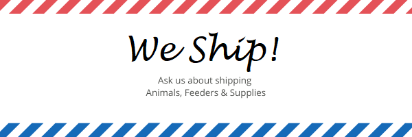 Jungle Bob's Ships Live Animals, Feeders and Supplies!