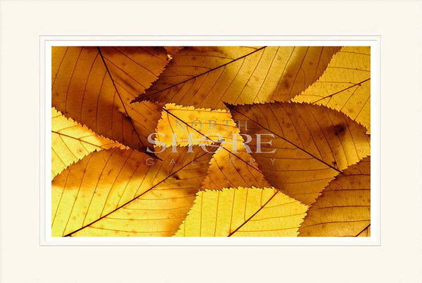 Colourful autumnal leaves