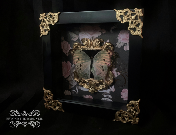 Mother of Pearl Butterfly Shadow Box