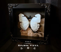 Classic White Morpho Butterfly Shadow Box