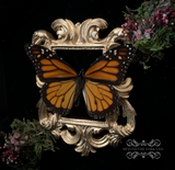 Enchanted Forest Monarch Butterfly Shadow Box