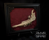 Enchanted Forest Deer Mandible Frame