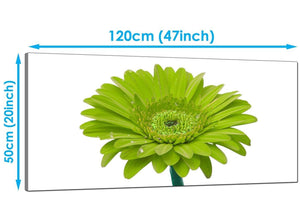 Bedroom Lime Green Wide Canvas of Daisy