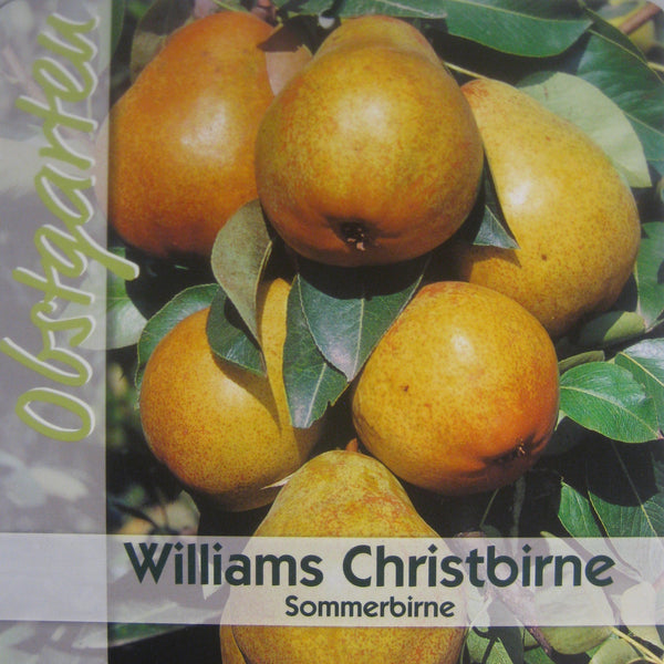 Sommerbirne 'Williams Christ' Pyrus communis 'Williams Christ' - Pflanzenshop-Emsland