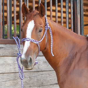 Classic Equine Colored Mule Tape Halter with Lead