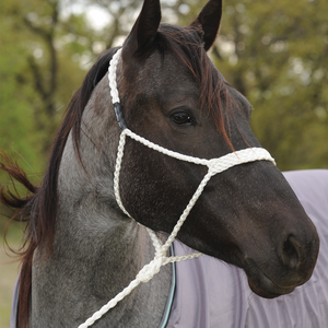 Classic Equine Mule Tape Halter with Lead