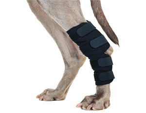 Back On Track Therapeutic Dog Hock Brace